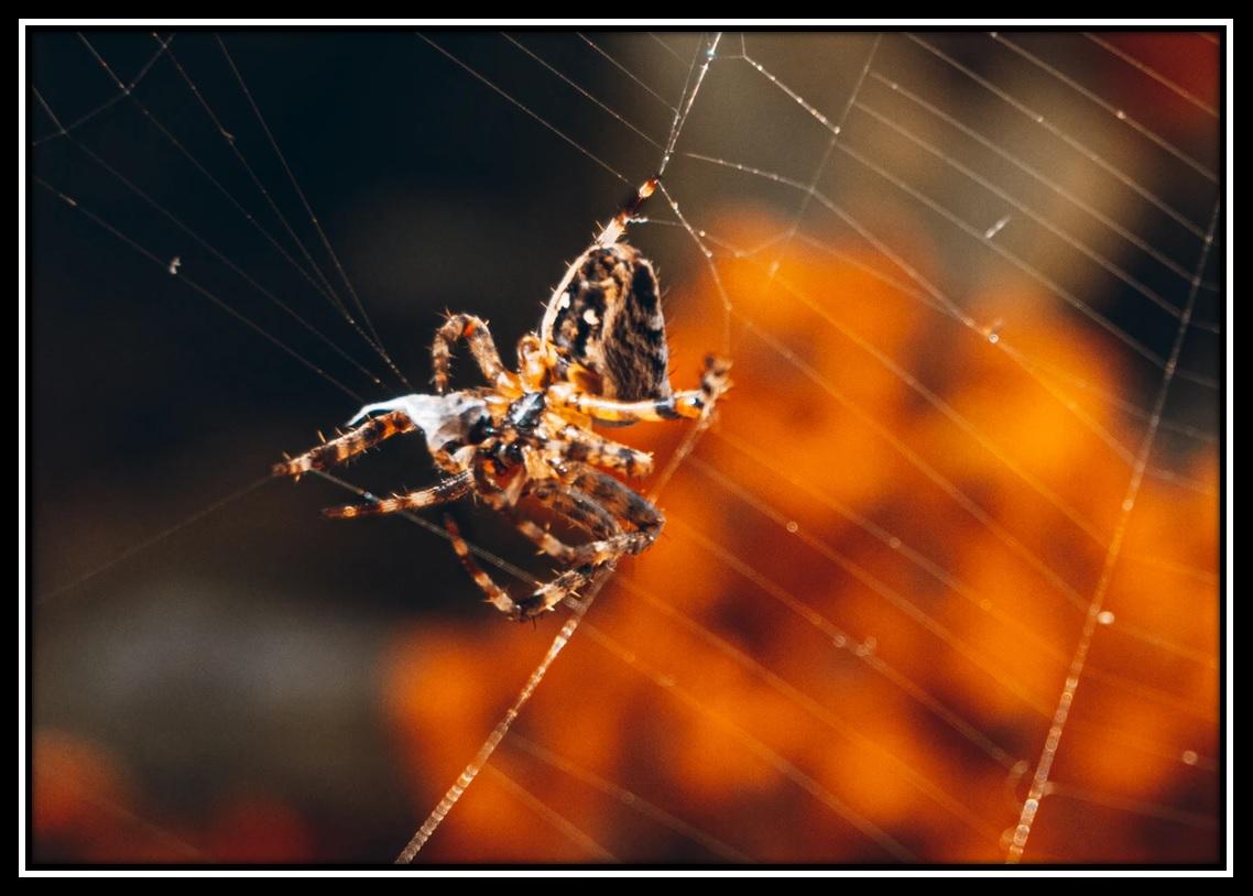 The Web: A Halloween Short Story